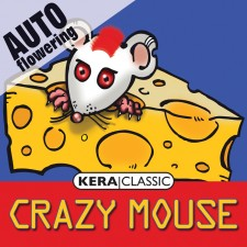 CRAZY MOUSE AUTO (Cheese auto) - Kera Auto