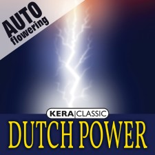 DUTCH POWER AUTO- Kera Auto