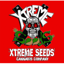 High Ryder ASB - Xtreme Seeds